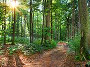 Mittelgebirge Teutoburger Wald